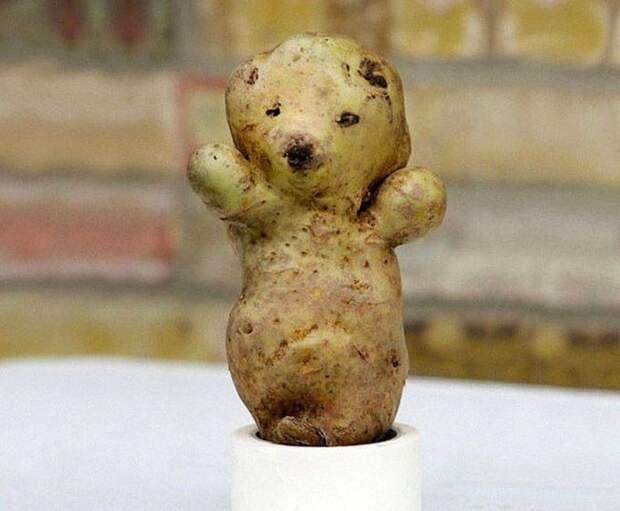 21. Картофельный мишка овощи, фрукиы