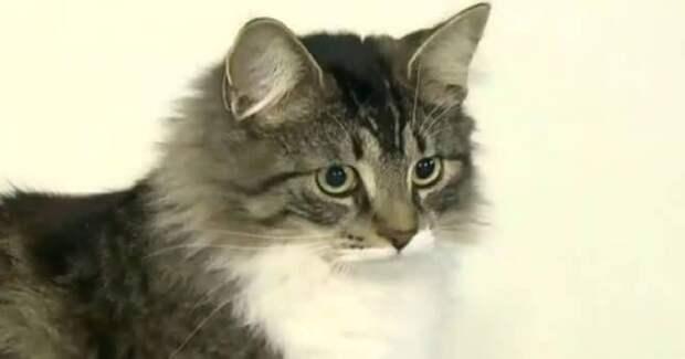 «Живая» посылка: котишка по ошибке отправился в коробке в другой город!