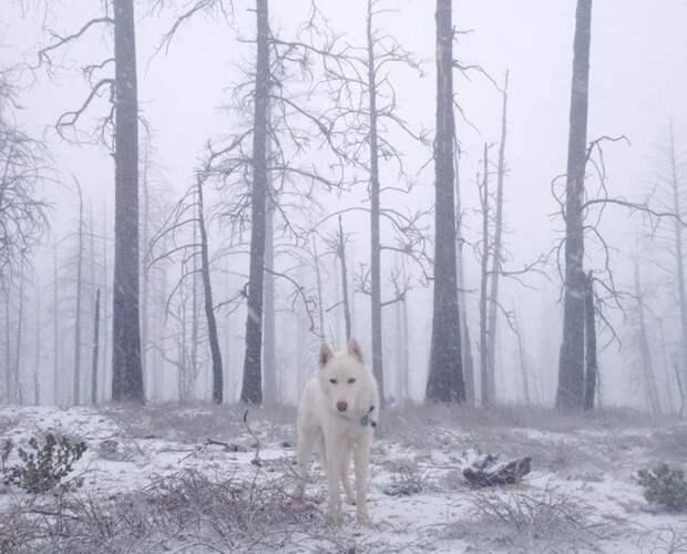 путешествие по США Джона Шторца и его собаки Вольфа (3)