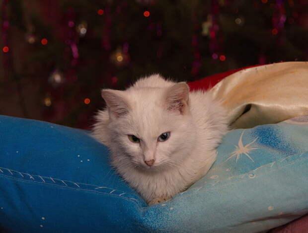 Котейки везде деревня, животные, история, коты