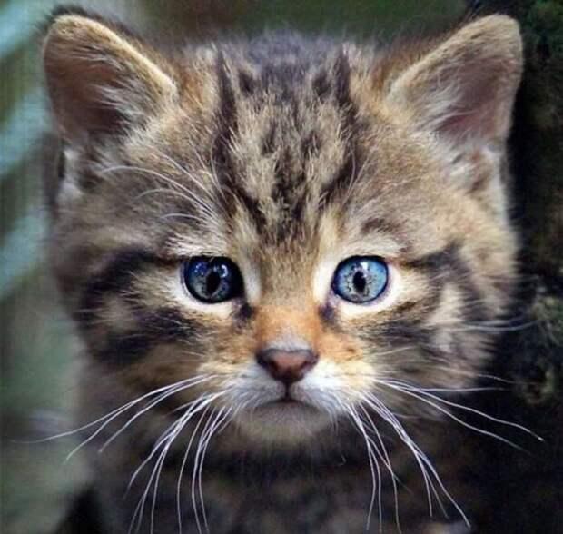 А вы видите кошек на этих картинках? (31 фото)
