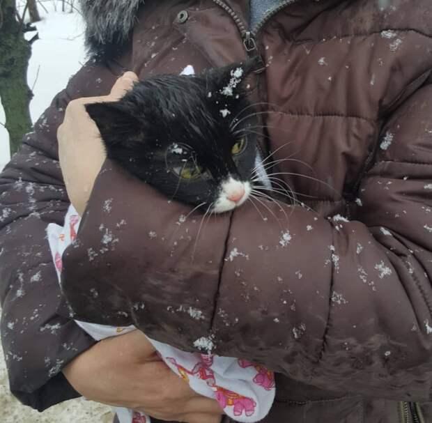 Девушка гуляла с ребёнком, когда увидела кошку, которая почему-то не двигалась с места. Лапки МУРлыки примёрзли ко льду…