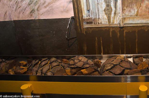 Процесс производства текилы