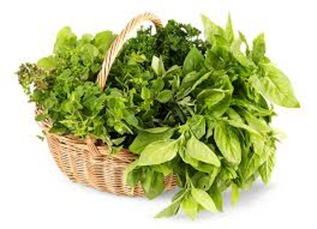 Зелень для Мейн Куна