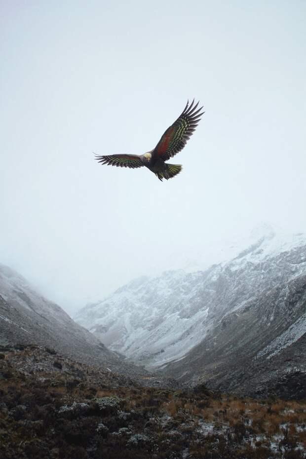 Арктика и Антарктика на удивительных снимках Джона Бозинова