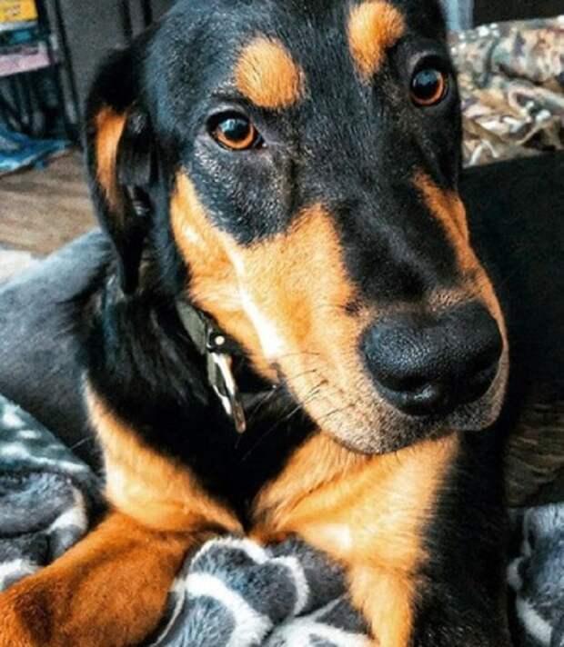 Шкодливый пёс, оставшийся в одиночестве, сумел завоевать сердце своей новой хозяйки, несмотря на характер
