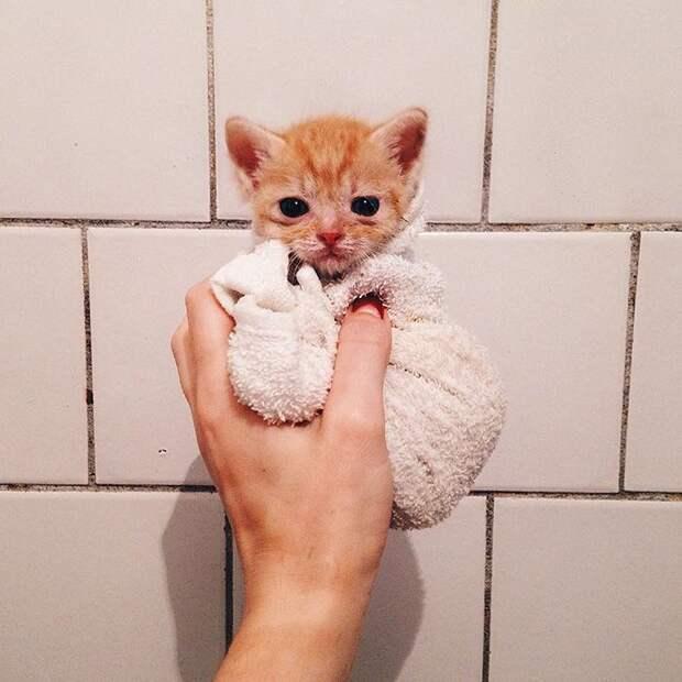 два рыжих кота найденные в саду, москвичка нашла двух котов, эти коты не расставались ни на один день