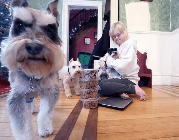 Девушка с синдромом Дауна превратила свою любовь к собакам в собственный бизнес