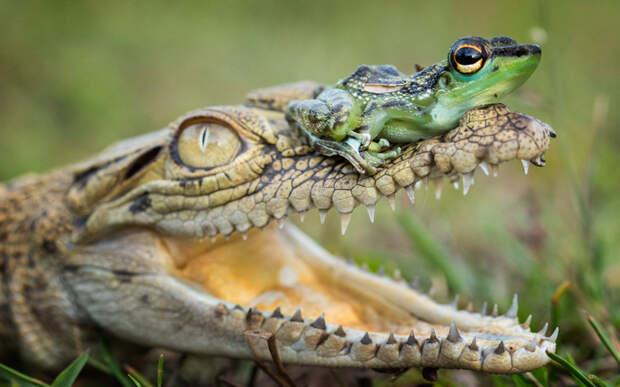 Необычные друзья, Индонезия