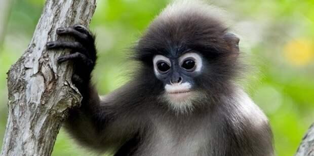 Ученые смогли доказать, что обезьяны произошли от человека