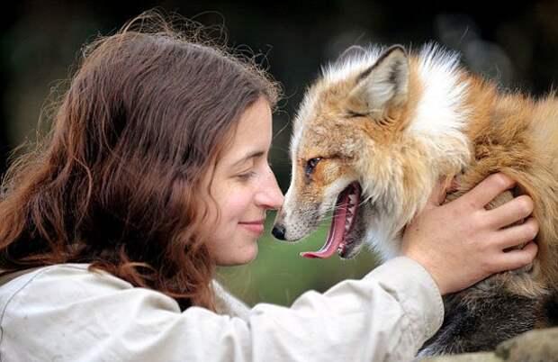 лиса думает что она собака