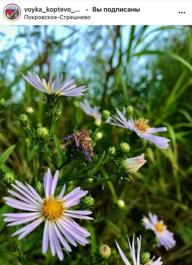 Фото дня: флора парка «Покровское-Стрешнево»