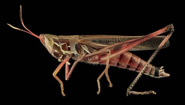 Eating insects: absurd or the future?