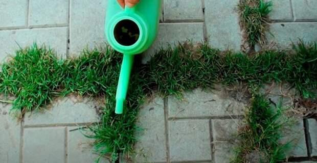 Простой способ, который позволит избавить от сорняков, прорастающих между тротуарной плиткой