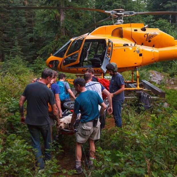 Спасатели пришли на помощь уставшей в походе собаке