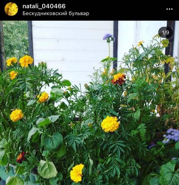 Фото дня: балконный цветник в Бескудникове