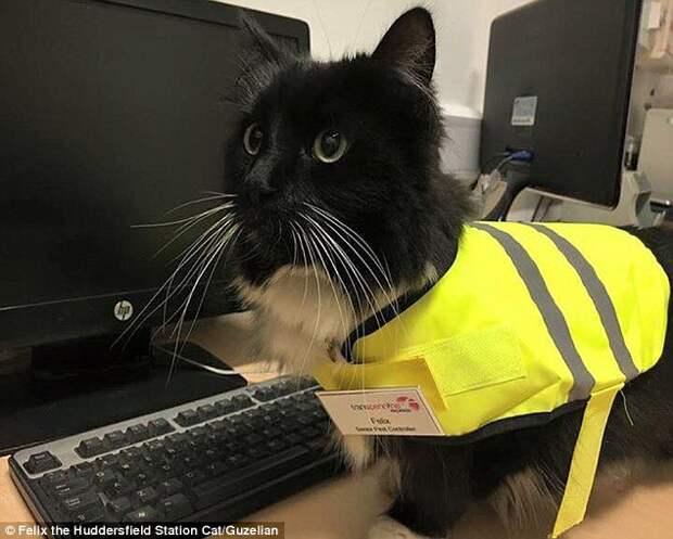 Кот контроллер из Хаддерсфилда