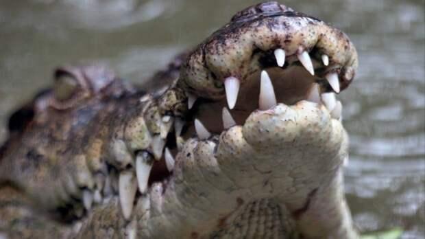 Поулицам ходила: вЯлте из-за потопа пришлось спасать животных изкрокодиляриума