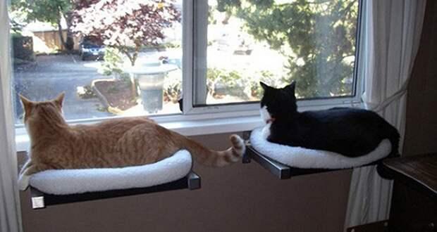 cathouse18 Дизайн для котов
