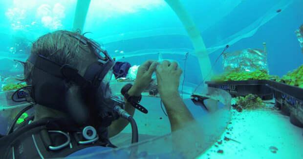Умопомрачительные фотографии первых в мире подводных теплиц