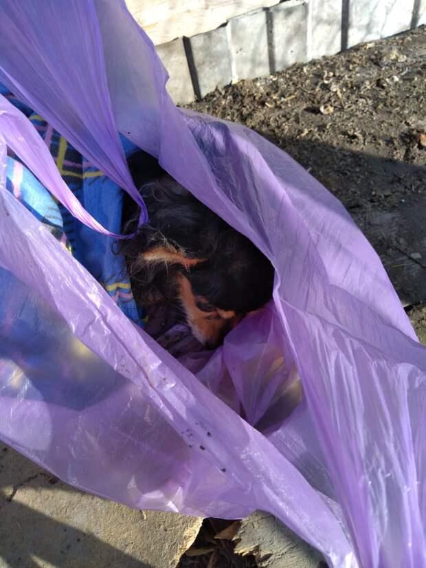 Волонтеры не поверили своим глазам, когда заглянули в пакет, появившийся на территории приюта волонтер, история, пакет, порода, собака