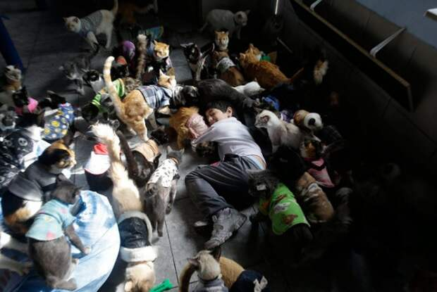 Женщина превратила свой дом в приют для 175 тяжелобольных кошек Мутантов, кошек, сотни