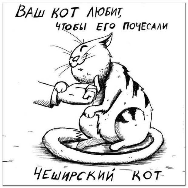 Определяем породу кошки по ее характеру животные, коты, рисунки