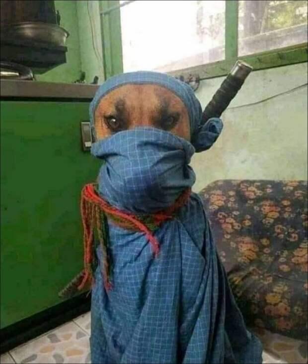 Пёс-самурай