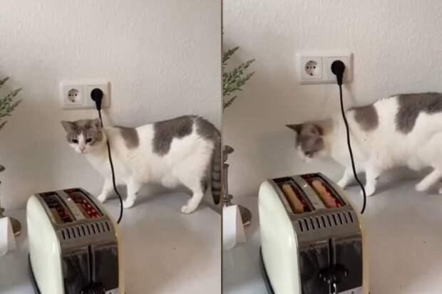 Кошка впервые увидела тостер, ее эмоциональная реакция рассмешит любого