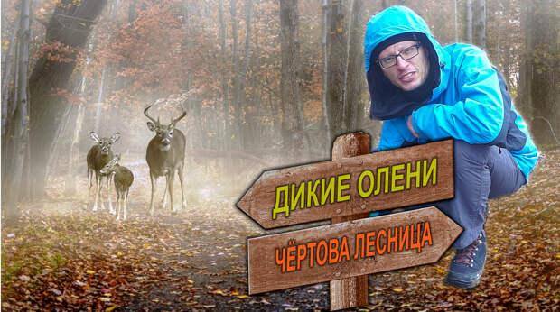Зимний поход по Крыму. #5. Чёртова лестница. Байдарские ворота. Гора Кильсе-Бурун. Встреча с оленем!