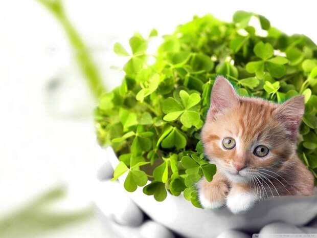 10 растений, которые принесут в ваш дом любовь