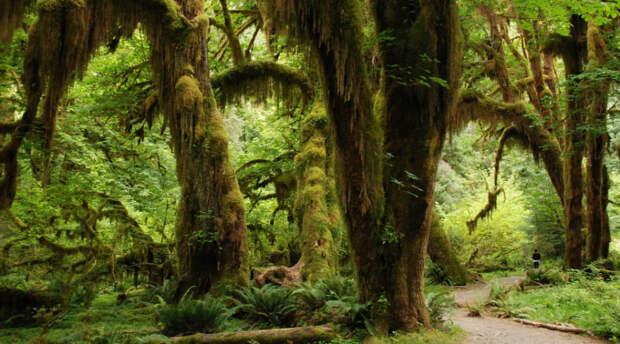 Учёные сумели воссоздать внешний вид доисторического леса