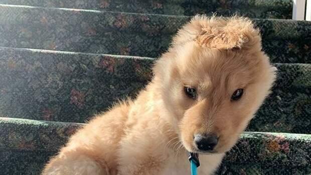 Этот щенок родился с одним ухом и уже успел влюбить в себя весь интернет!