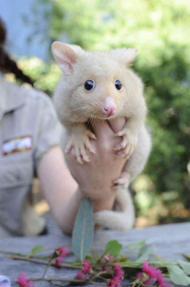 К ветеринару привезли животное, которое не существует в природе