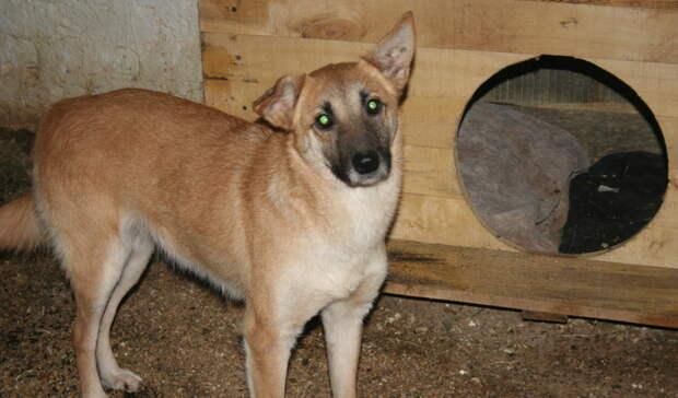 Владелица курского приюта для собак: Ограничения сняты, мыработаем вполном режиме