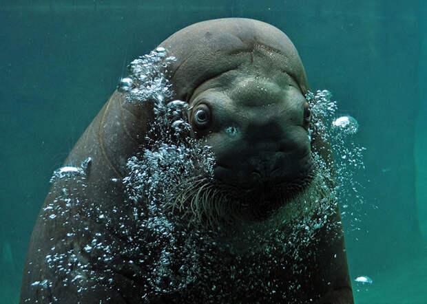 Подводные жители передают привет наземным (Misty Gage, США).