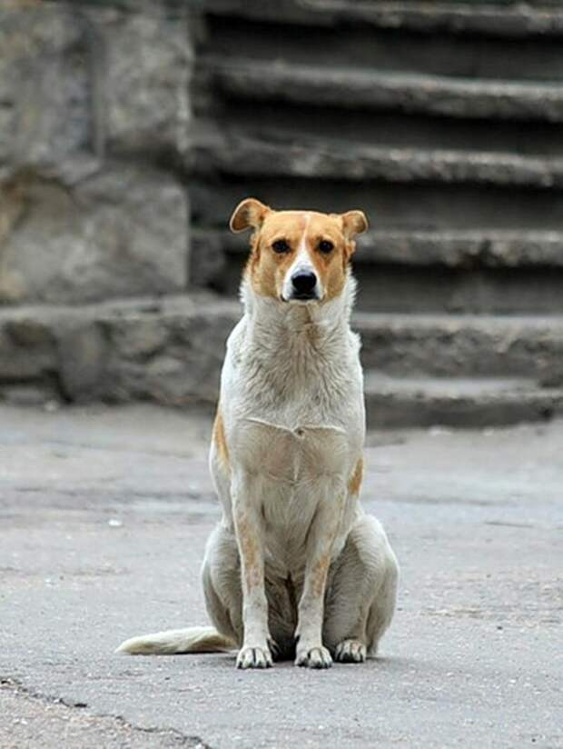 У МЕНЯ ПРЯМО НА УЛИЦЕ ПОТЕКЛИ СЛЕЗЫ... Как водители издеваются над животными?