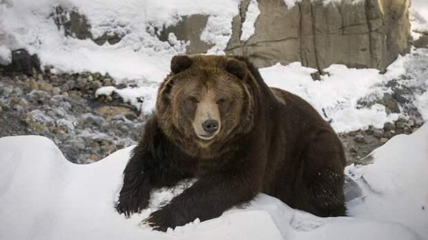 Британская Times призвала запереть русского «медведя в тайге»