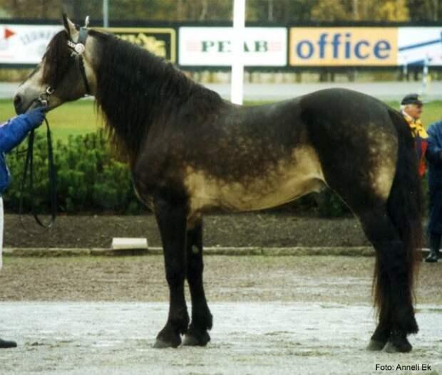 Рыжая с потемнением животные, красота, лошади