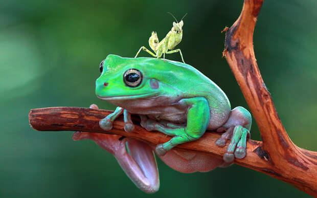 Фотографии животных недели