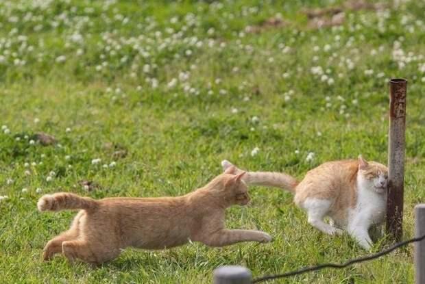 Иногда они попадают в неловкие... домашние животные, животные, как люди, коты, прикол, юмор