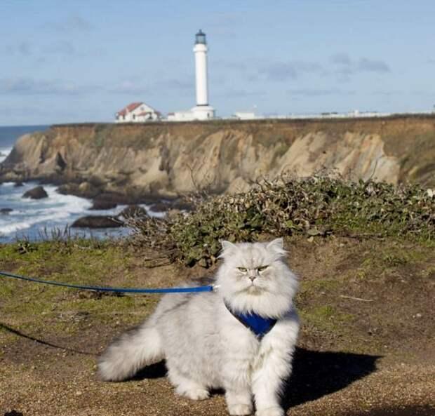 Путешествующий по США кот стал хитом Instagram