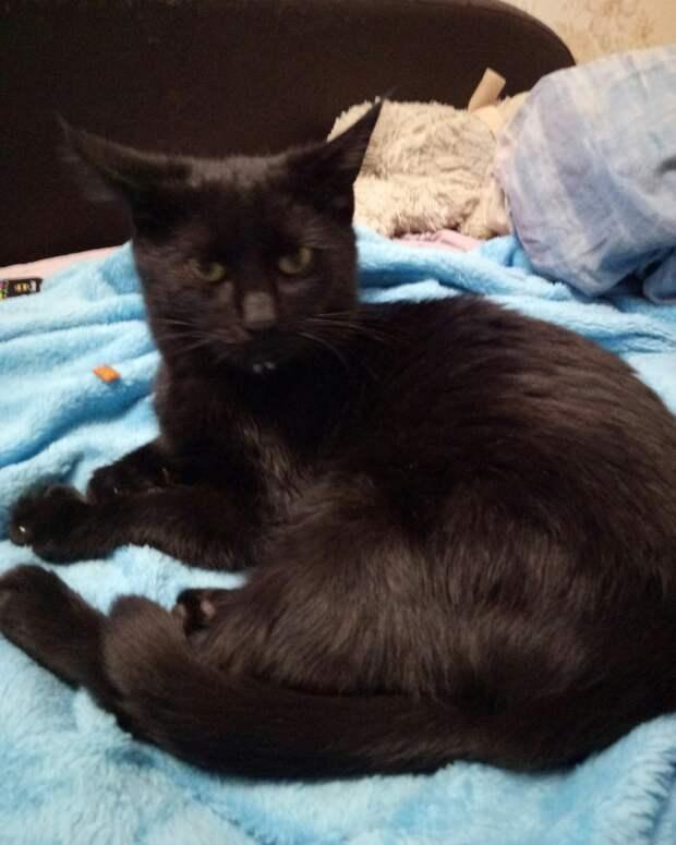 Девушку называют «котомамой». 7 лет назад она приютила котенка и понеслась