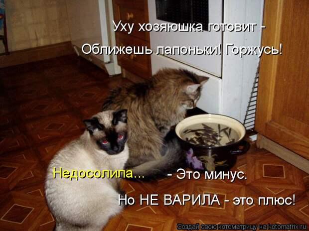 Котоматрица: Уху хозяюшка готовит -  Оближешь лапоньки! Горжусь! Недосолила...  - Это минус. Но НЕ ВАРИЛА - это плюс!