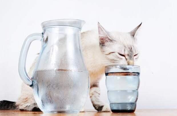 Девять странных привычек домашних животных