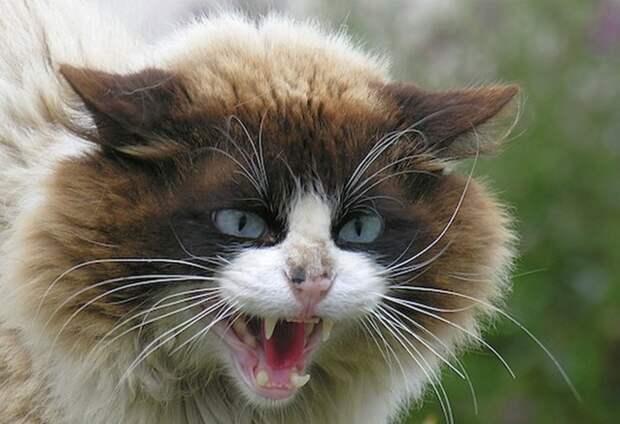 Война с котом, Как мы с Барсиком квартиру не поделили Война с котом, Как мы с Барсиком квартиру не поделили.