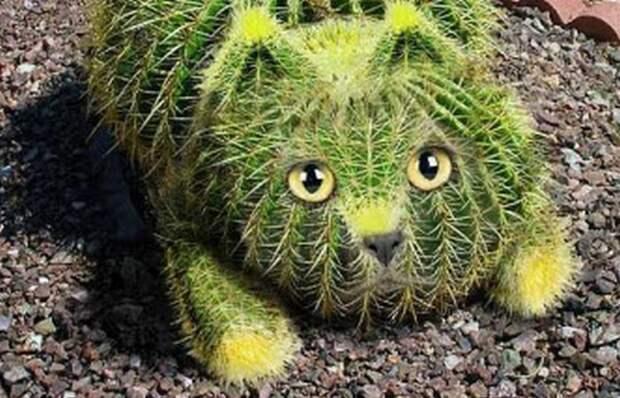 Озёрные существа кактусовые коты.