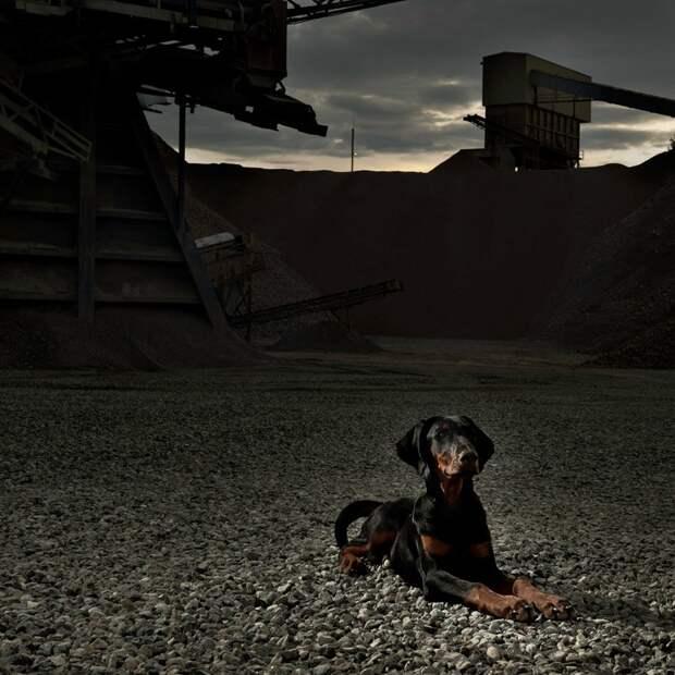 AggressiveDogs10 10 самых агрессивных пород собак
