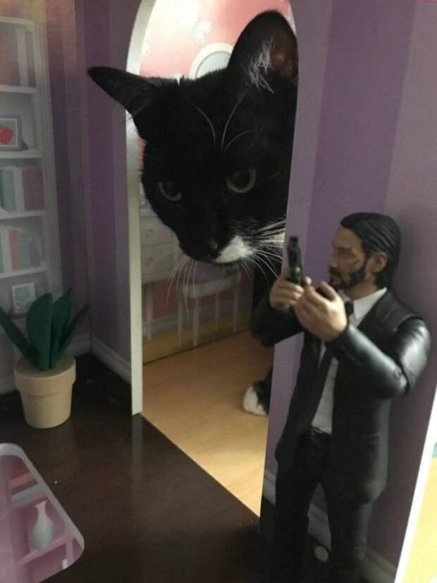 Кот и Джон Уик