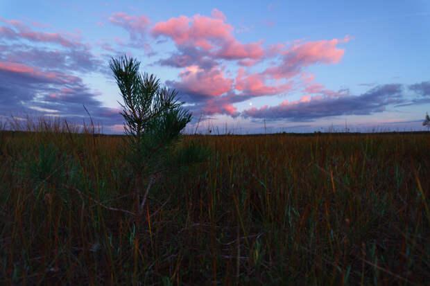 Красоты России. Богоявленское болото и озеро.